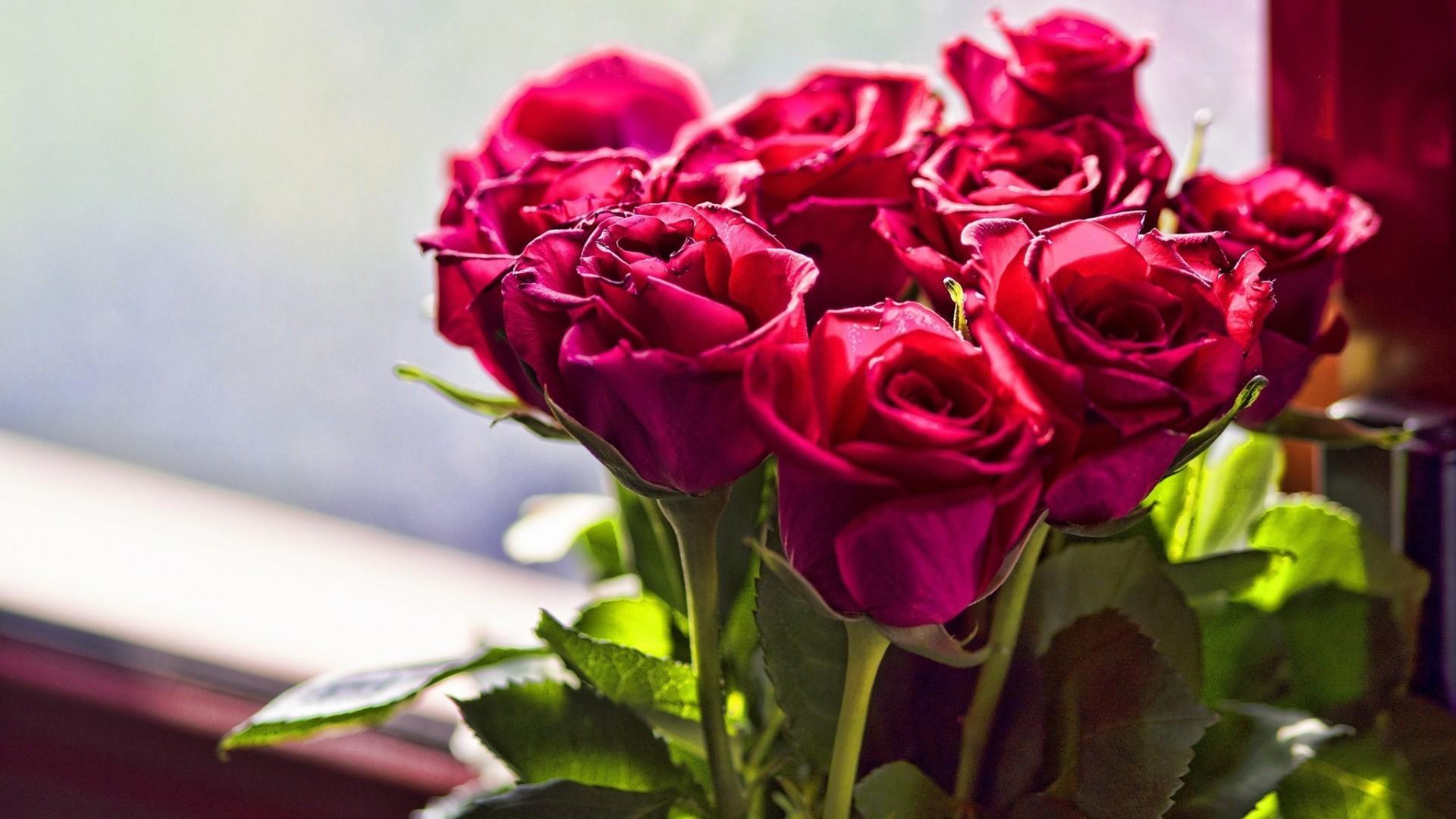 Foto pugetu růží