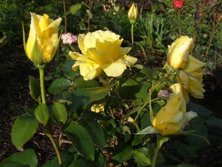 kvetoucí květiny