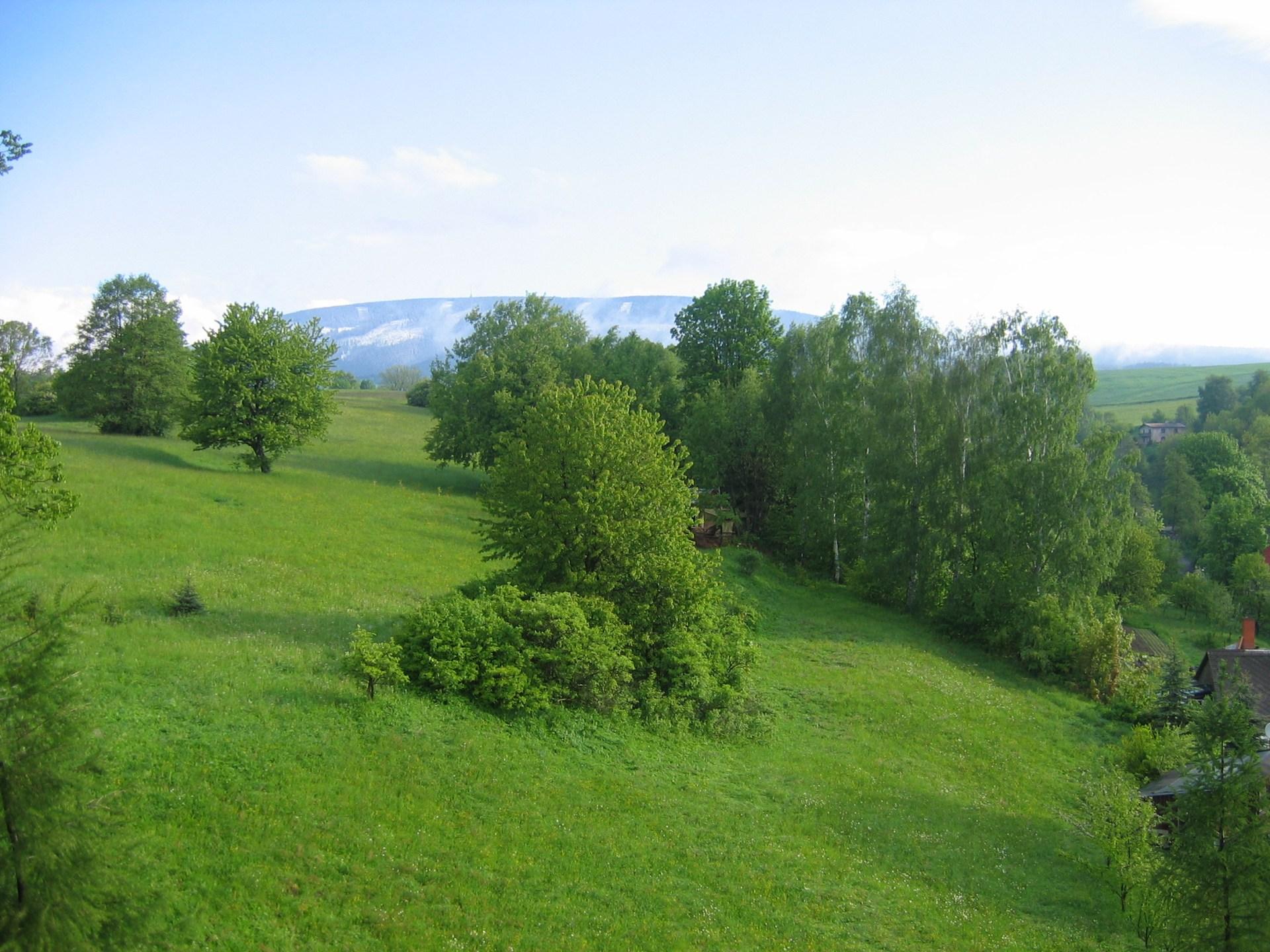 horská louka v létě