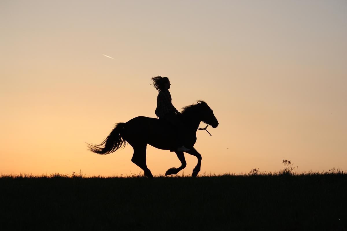 Focení do koní