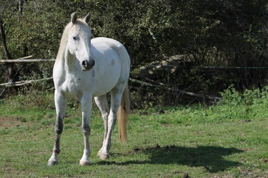 Leknín ranč Kopaniny