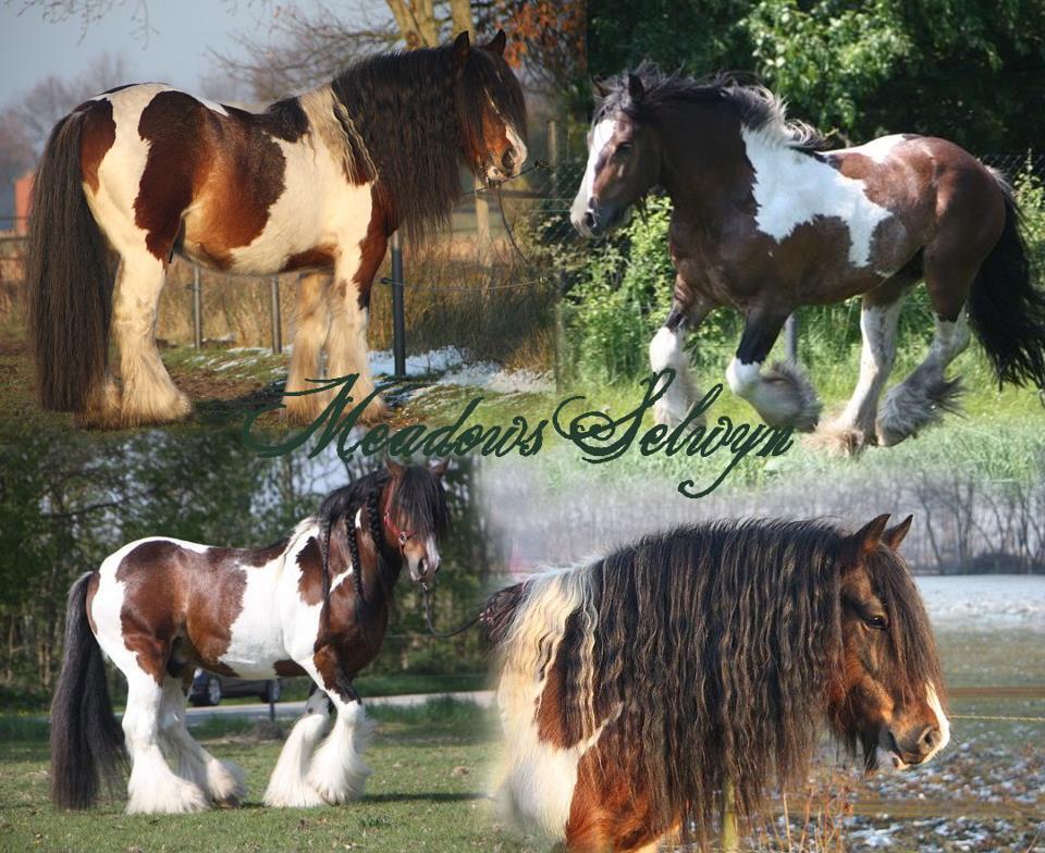 Meadows Selwyn