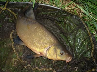Vhodné druhy ryb