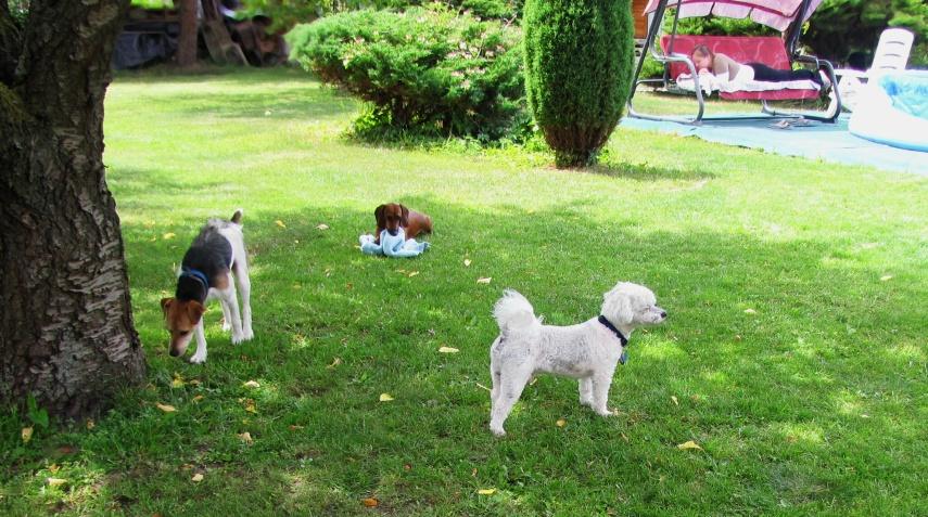Psí hotel a hlídání psů