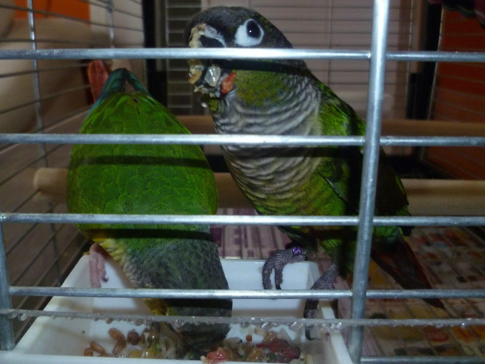 Směs pro papoušky