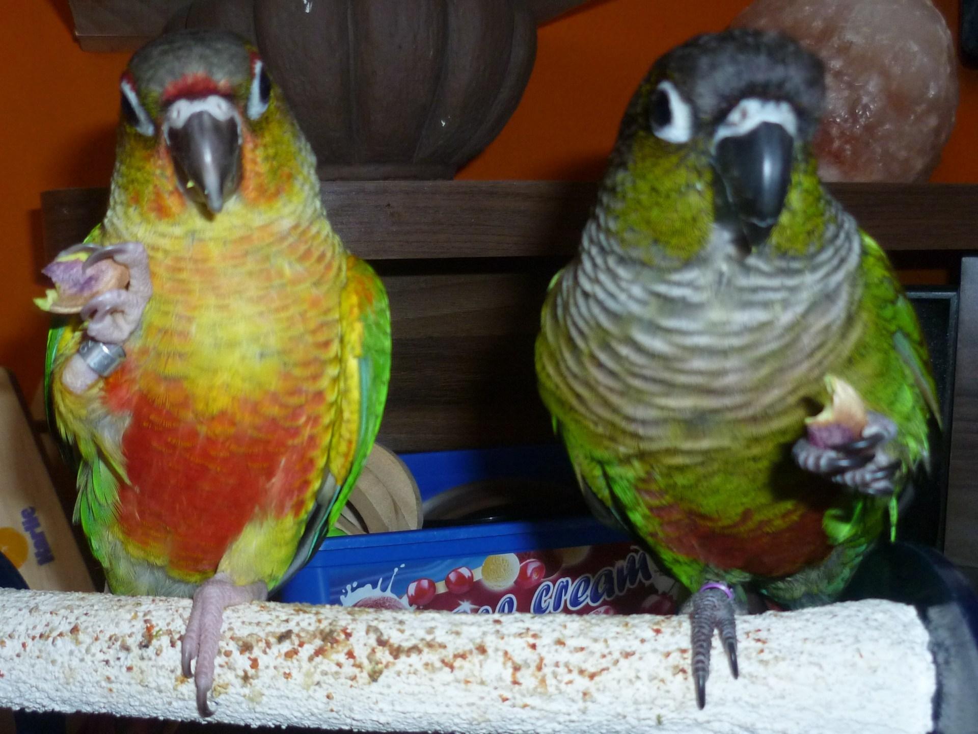 Ořechy pro papoušky