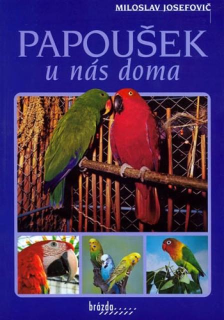 Papoušek u nás doma