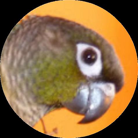 druhy papoušků s obrázky