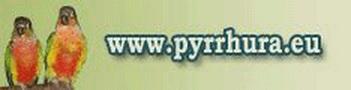 www.pyrrhura.eu